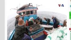 Hội Nghề Cá Việt Nam lên án các vụ tấn công của tàu Trung Quốc