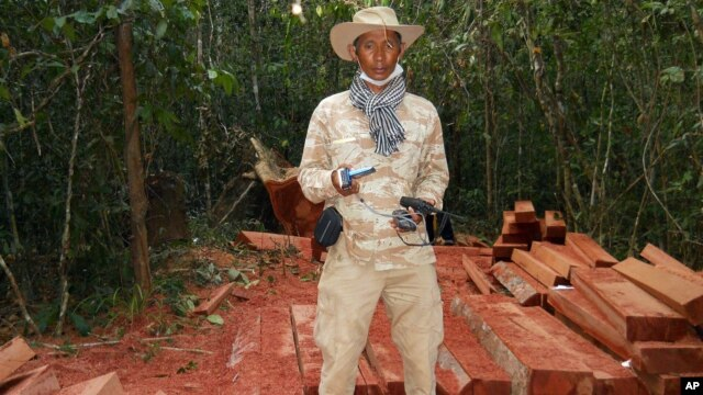 In this photo taken Feburary 6, 2012 and released by The Cambodian Center for Human Rights (CCHR), Chut Wutty stands on wooden planks of log in a jungle in Kampong Thom province in northern of Phnom Penh, Cambodia.
