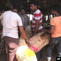 قربانی کے لیے عموماً چھوٹے جانوروں کو پسند کیا جاتا ہے۔