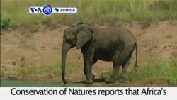 VOA60 Africa - Africa's elephant population fell around 20 percent between 2006 and 2015