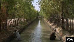 این کانال ۱۵۵۰۰ هکتار زمین را آبیاری می کند