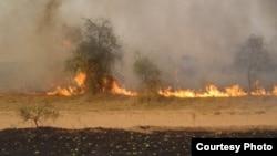 African savannah wildfire (Credit: World Agroforesrtry Center)