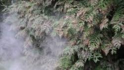 Quiz - Global Warming Cause Earlier Pollen Season