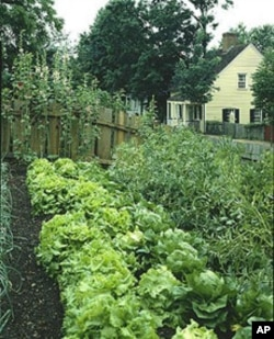 Old Salem has not only preserved historic houses but also re-created the kinds of gardens that were an extension of every household.
