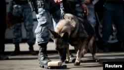 La policía de Brasil entrena a un grupo de perros para que puedan identificar sustancias explosivas, entre otras tareas relacionadas con la seguridad del próximo Mundial de Fútbol.