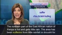 Anh ngữ đặc biệt: Kenya Drought Farming (VOA)