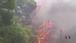 希臘當局認為野火有可疑