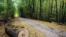 <div>جنگل دشت شاد در شاهرود<br /> عکس: سعید طلوعی</div>