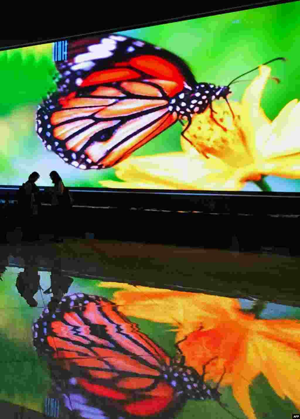 អ្នកចូលរួមដើរនៅពីមុខផ្ទាំងដ៏ធំមួយដែលបង្ហាញរូបមេអំបៅក្នុងកិច្ចប្រជុំលើកទី១៣នៃសន្និសីទប្រទេសជាសមាជិកនៃអនុសញ្ញាស្តីពីភាពចម្រុះគ្នានៃជីវសាស្រ្ត (Convention on Biological Diversity) ក្នុងក្រុង Cancun ប្រទេសម៉ិកស៊ិក។ កិច្ចប្រជុំលើកទី១៣នៃសន្និសីទប្រទេសជាសមាជិកនៃអនុសញ្ញាស្តីពីភាពចម្រុះគ្នានៃជីវសាស្រ្តនឹងប្រព្រឹត្តទៅរហូតដល់ថ្ងៃទី១៧ ខែធ្នូនៅរមណីយដ្ឋាននៅតាមមាត់សមុទ្ររបស់ក្រុង Cancun ហើយគេរំពឹងថា កិច្ចប្រជុំនេះនឹងផ្តោតលើការប្រយុទ្ធប្រឆាំងនឹងការជួញដូរសត្វខុសច្បាប់។