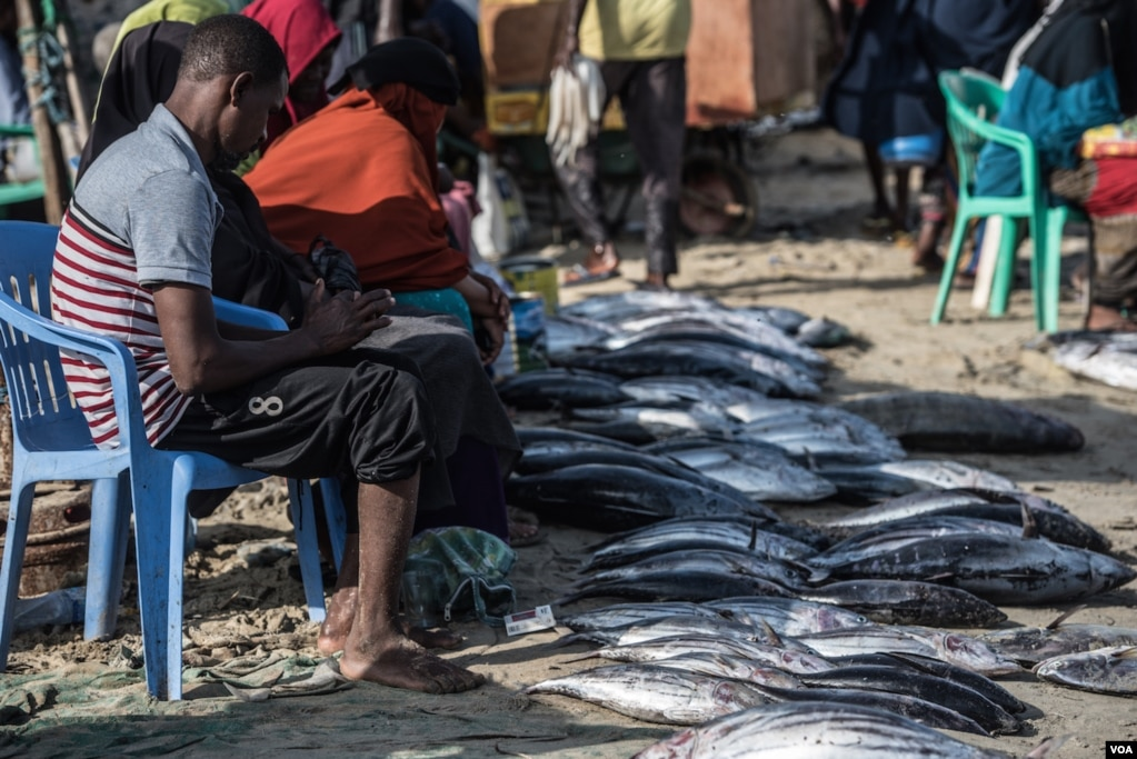 Tuna Is Laid Out For Sale In Bossaso Northern Somalia In Late March 2018