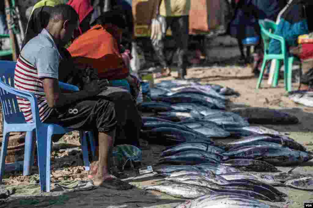 Tuna is laid out for sale in Bossaso, northern Somalia in late March 2018. (J. Patinkin/VOA)