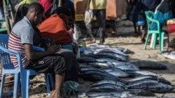 Pressão pesqueira pode delapidar espécies moçambicanas, alerta sociedade civil