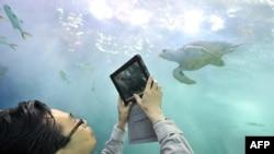Một du khách chụp hình 1 con rùa tại bể nuôi thủy sản của Expo 2012 tại Yeosu, 1 thành phố nhỏ của Hàn Quốc, 11/5/2012