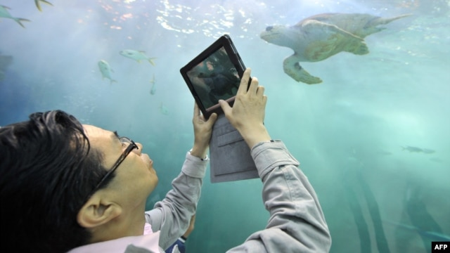 A visitor takes picture a turtle at an aquarium of the Expo 2012 in Yeosu, a small city on South Korea's south coast, May 11, 2012.