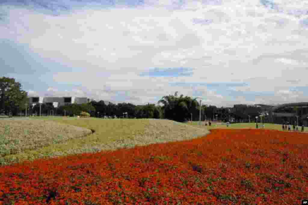 花博園區內色彩鮮豔的花海