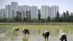 """时事大家谈: 习近平的""""回归""""农村政策能走多远?"""