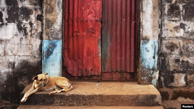 A dog sits on the steps of a door into the compound of a traditional colonial-era Board House dating back about a century in the Murray Town neighborhood of Sierra Leone's capital Freetown, April 28, 2012.