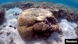 Sepotong karang besar terlihat di laguna yang terletak di Lady Elliot Island 80 kilometer sebelah timur kota Bundaberg di Queensland, Australia, 9 Juni 2015. (Foto: dok. REUTERS/David Gray)