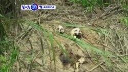 Amaperereza ya ONU yavumbuye imva rusange 17 nshya muri Congo Kinshasa rwagati