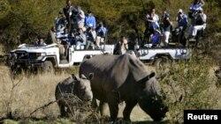 FILE - Rhinos graze as the White House press corps awaits U.S. President George W. Bush as he toured the Mokolodi Nature Reserve in Botswana, July 10, 2003.