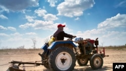 Fermerët thonë se ndryshimet klimatike po dëmtojnë të korrat
