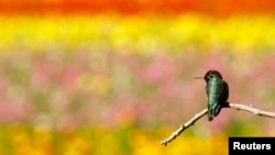 A hummingbird rests on a tree branch.