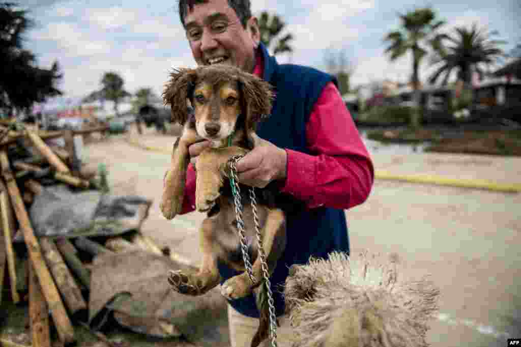 Jorge Castro rescues dogs that got lost during the tsunami that followed an 8.3 earthquake on Thursday.  The disaster has left 12 people dead and five more missing, in Coquimbo, 450 km north of Santiago, Chile.