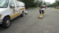 Teen Girls Learn Firefighting