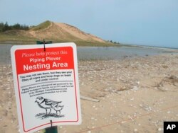 In this May 30, 2019 photo, a sign warns visitors of a piping plover nesting area in Glen Haven, Mich. (AP Photo/John Flesher)