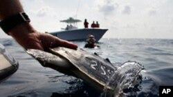 Θα μπορούσε να είχε αποφευχθεί η πετρελαιοκηλίδα στον Κόλπο του Μεξικού