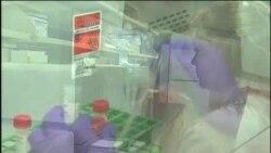 研究报告:2009年猪流感死亡人数远高于世卫报告