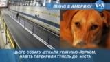 Як собака зупинив тунель до Нью-Йорка