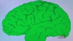 США дають 3 мільярди на вивчення роботи мозку