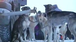 美国万花筒:阿拉斯加狗拉雪橇比赛;苹果表问世