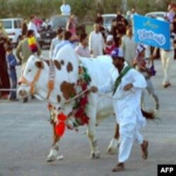 Texas: Chorvachilik yarmarkarlari va rodeo o'yinlari