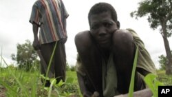 A laborer tends to a field in the Central African Republic (File)