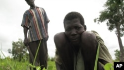 FILE - A laborer tends to a field in the Central African Republic, despite his affliction with river blindness.
