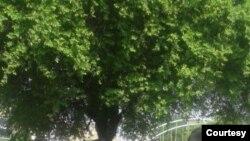 دهمین روز از دور جدید اعتصاب کارگران هفتتپه - ۱۵ مهر ۱۴۰۰