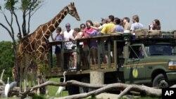 El parque Busch Gardens es otra de las grandes atracciones de Tampa, que se encuentra a corta distancia de Orlando, con su propio parque, acuario y escenarios turísticos.