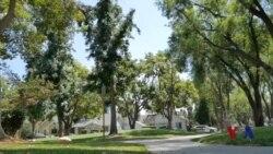 洛杉矶的植树一百万棵计划