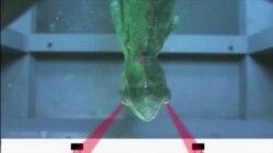 카멜레온 눈의 과학