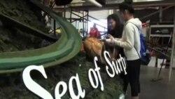玫瑰花车游行推广品牌与事业