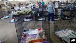 Một trung tâm tạm lánh ở North Carolina.