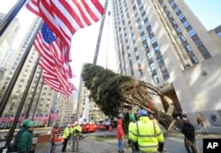 Trabajadores ayudados por una grúa levantan el árbol de navidad del Rockefeller Center. Nov. 11, 2017.