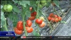 Shqipëri, siguria e ushqimeve