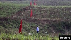 Nông dân trên đồng ruộng cắm cờ Trung Quốc ở Kokang, gần biên giới Myanmar, ngày 24/3/2015.
