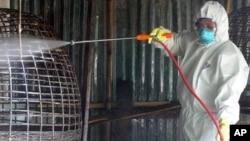 H5N1 ကူးစက္ျပန္႔ပြားမႈ မျဖစ္ေစရန္ ထိုင္းႏိုင္ငံတြင္းက ၾကက္ေမြးျမဴေရးျခံေတြမွာ လုပ္ေဆာင္စဥ္။