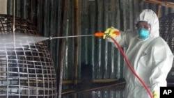 Pada akhir pekan minggu lalu lebih dari 4.000 ekor ayam dan itik di desa, di mana seorang gadis berusia 15 tahun meninggal akibat tertular flu burung, dimusnahkan (foto; Dok).