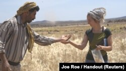 Amaia Arranz-Otaegui, a University of Copenhagen postdoctoral researcher in archaeobotany, and Ali Shakaiteer, a local assistant to researchers working at an archeological site in the Black Desert in northeastern Jordan, are seen collecting wheat in this