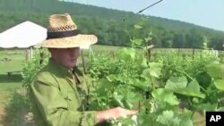 Master winemaker Sebastien Marquet checks the vines at the Doukenie winery in Purcellville, Virginia.